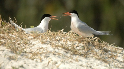 Enjoy Bird Watching On Great Barrier Reef Australia