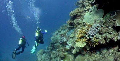 The Great Barrier Reef Australia A Diving Paradise