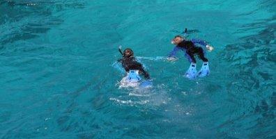 Snorkeling On The Great Barrier Reef Australia
