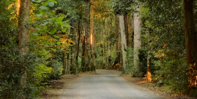 Lamington National Park Road