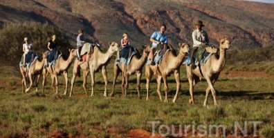 Catch The Camel Train At Uluru-Kata Tjuta National Park World Heritage Area