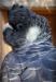 white tailed black cockatoo