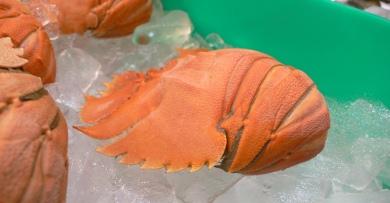 Australian Seafood - Balmain Bug (lobster)