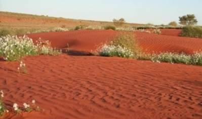 Outback Sandhills