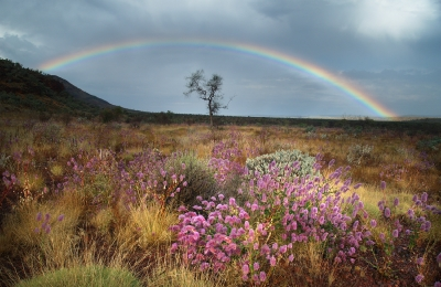 Beautiful Rainbow & Wildflowers