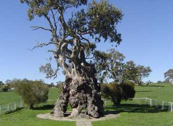 The Herbig Family Tree at Springton