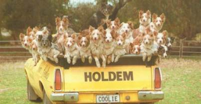 See Norms Coolies Perform - all the Coolies in the back of his ute