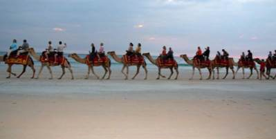 Camels On Cable Beach Western Australia