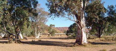 The Todd River In Alice Springs