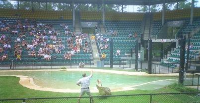Crocs Being Fed at Australia Zoo