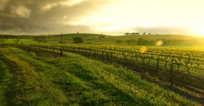 View of Vineyards of the Barossa Valley South Australia