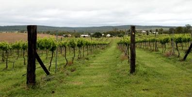 Vineyard in Queensland - Chapel in The Vines