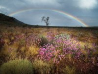 Western Australia Wildflowers and Rainbow