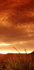 Outback Sun