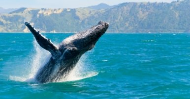 Whale Watching On The Great Barrier Reef Australia