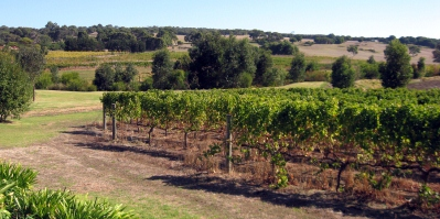 Vineyard of the Margaret River Western Australia